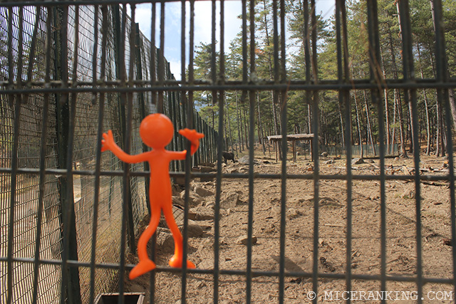 Stickman Motithang Zoo Fence